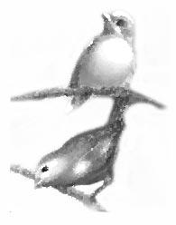 nidos